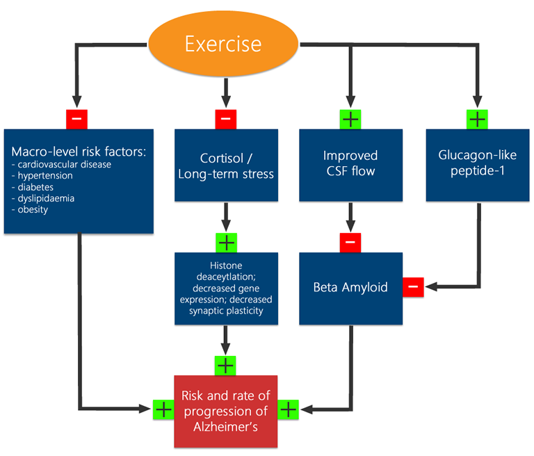 Exercise's benefits to Alzheimer's include improved handling of stress, improved cerebrospinal fluid flow, Glucagon like peptide-1 improvements - as well as a reduction in general metabolic risk factors